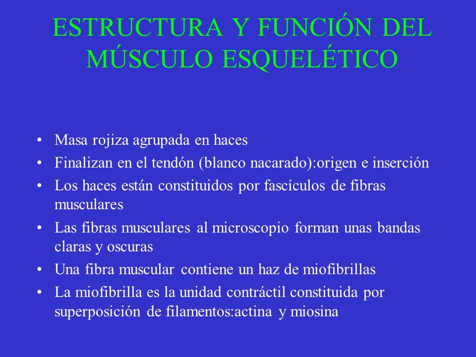 ESTRUCTURA Y FUNCIÓN DEL MÚSCULO ESQUELÉTICO