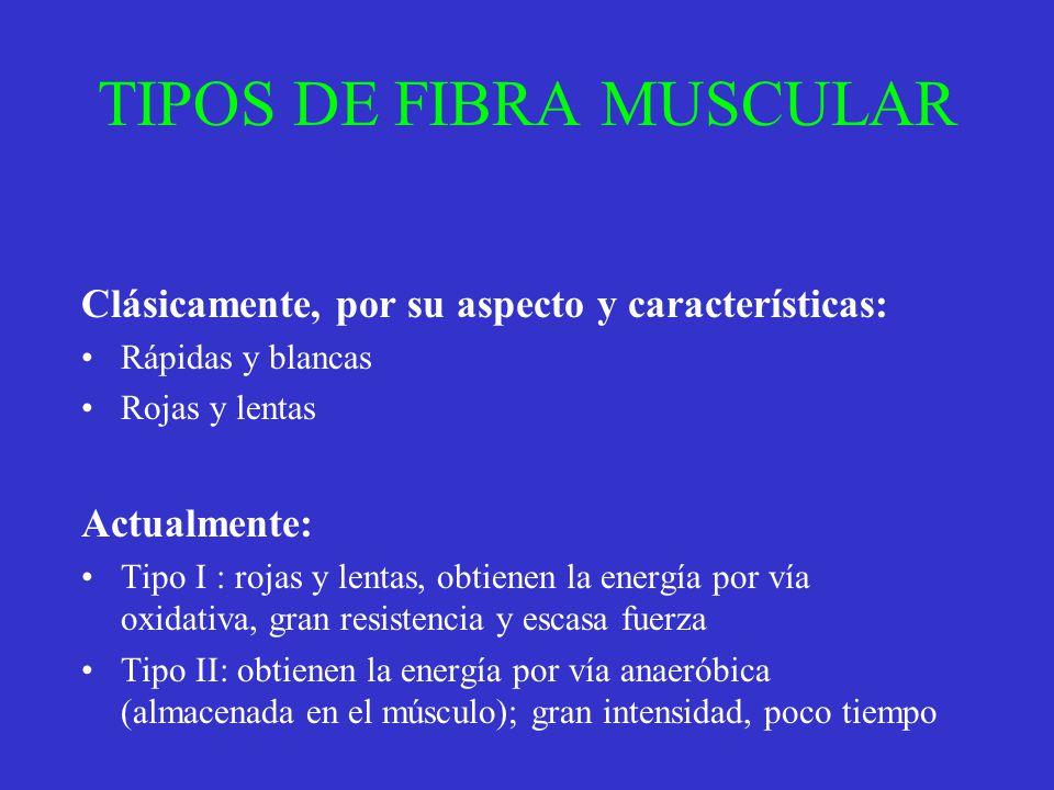 TIPOS DE FIBRA MUSCULAR