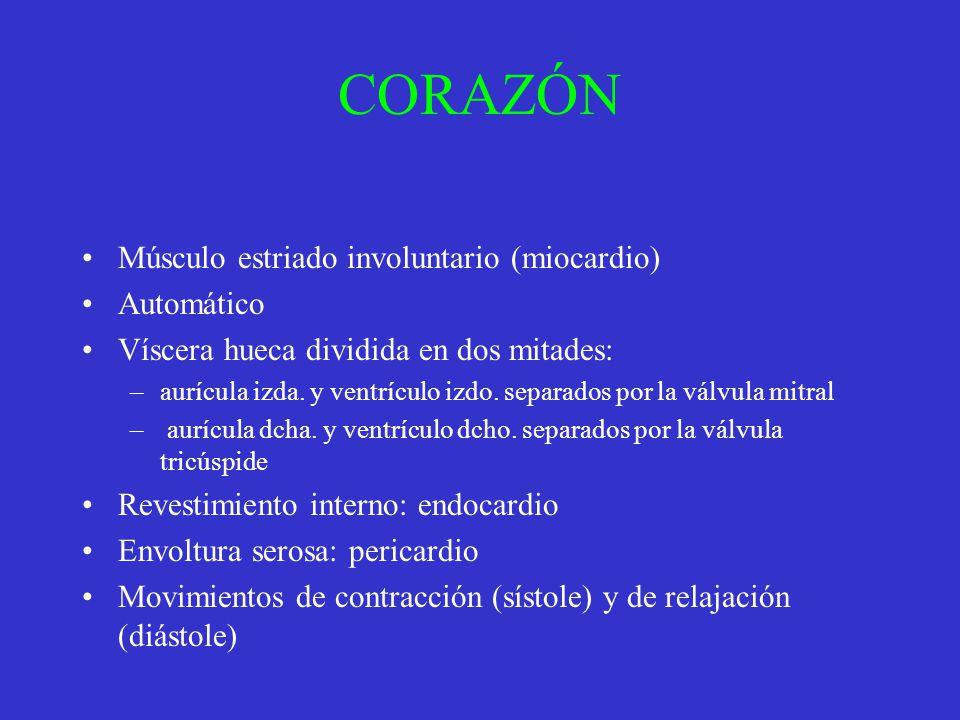 CORAZÓN Músculo estriado involuntario (miocardio) Automático