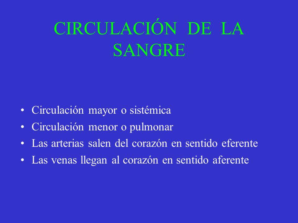 CIRCULACIÓN DE LA SANGRE