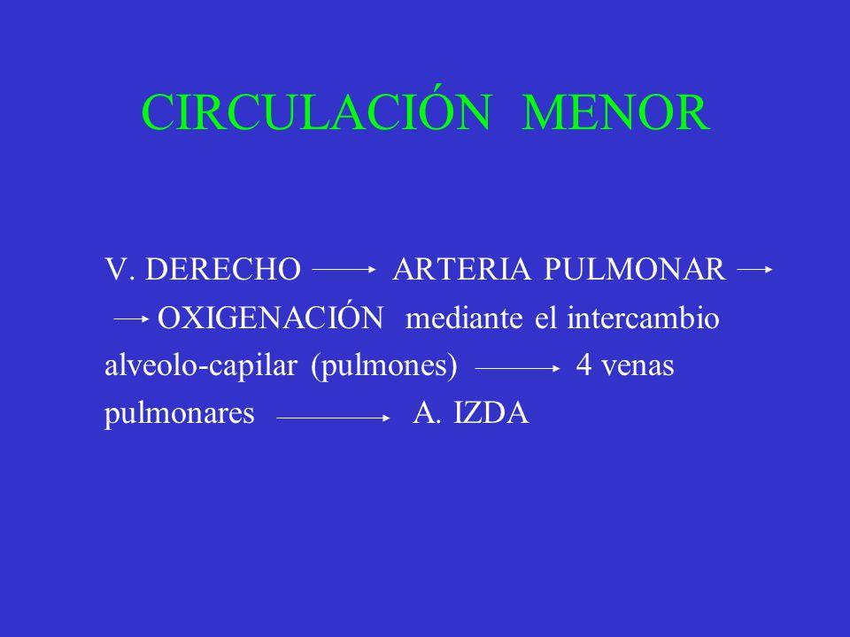 CIRCULACIÓN MENOR V. DERECHO ARTERIA PULMONAR