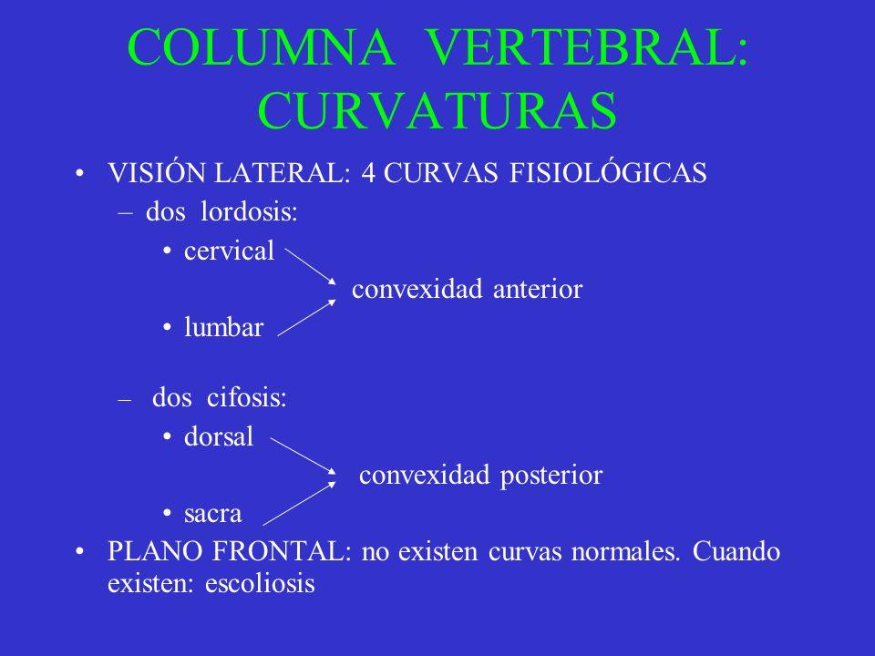 COLUMNA VERTEBRAL: CURVATURAS