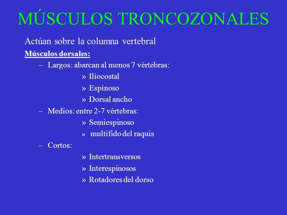 MÚSCULOS TRONCOZONALES