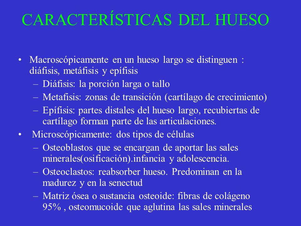 CARACTERÍSTICAS DEL HUESO