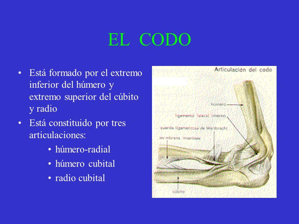 EL CODO Está formado por el extremo inferior del húmero y extremo superior del cúbito y radio. Está constituido por tres articulaciones: