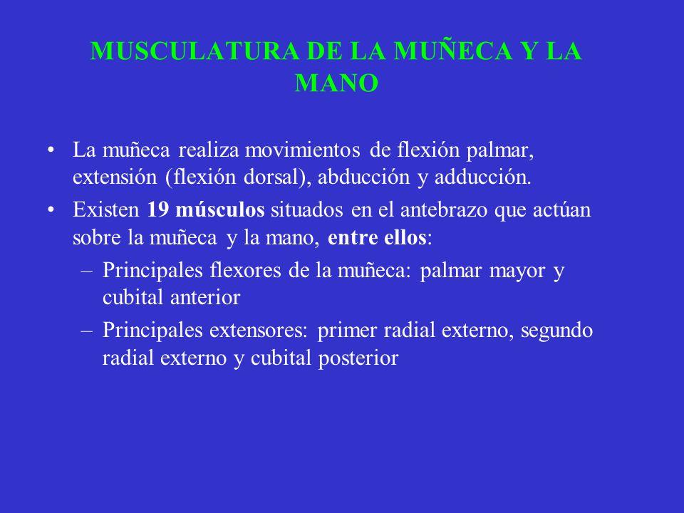 MUSCULATURA DE LA MUÑECA Y LA MANO