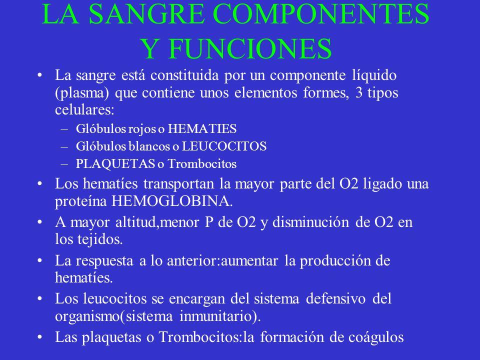 LA SANGRE COMPONENTES Y FUNCIONES