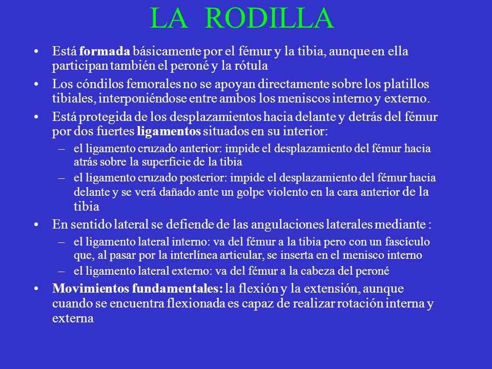 LA RODILLA Está formada básicamente por el fémur y la tibia, aunque en ella participan también el peroné y la rótula.