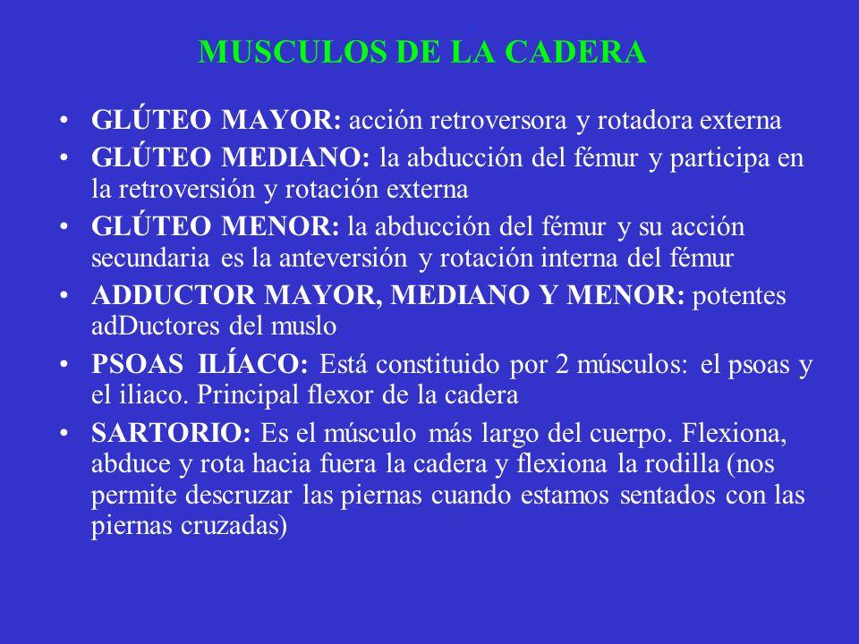 MUSCULOS DE LA CADERA GLÚTEO MAYOR: acción retroversora y rotadora externa.