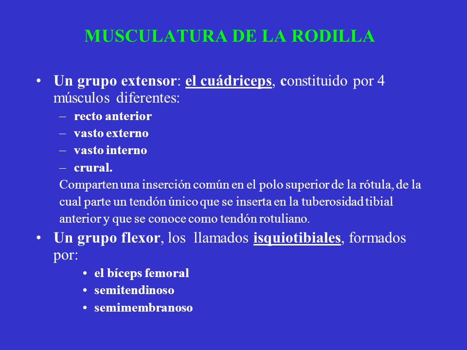 MUSCULATURA DE LA RODILLA