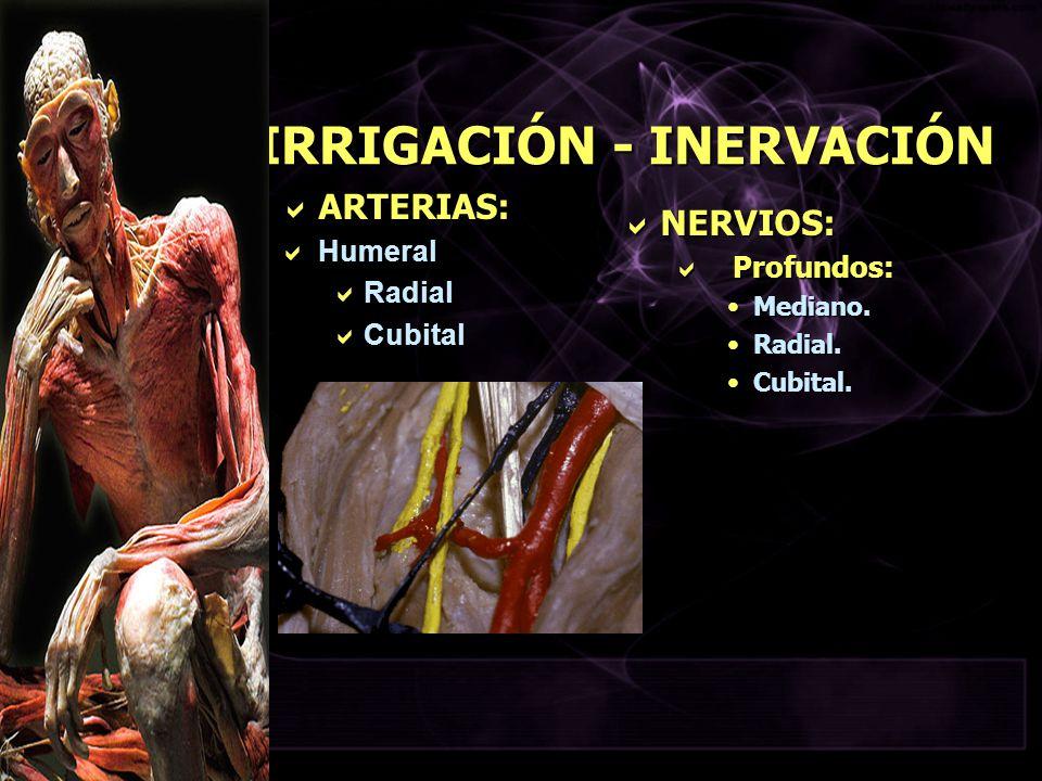 IRRIGACIÓN - INERVACIÓN