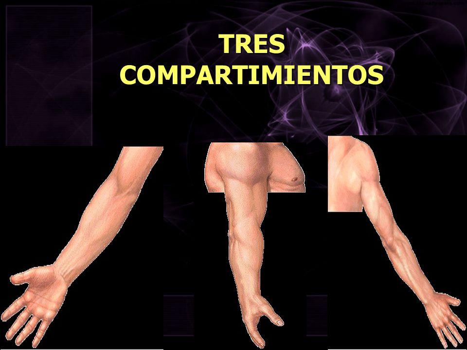 TRES COMPARTIMIENTOS
