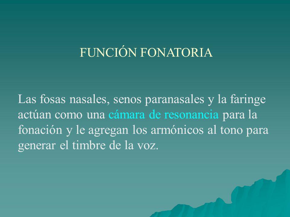 FUNCIÓN FONATORIA