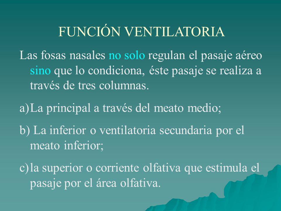 FUNCIÓN VENTILATORIA Las fosas nasales no solo regulan el pasaje aéreo sino que lo condiciona, éste pasaje se realiza a través de tres columnas.