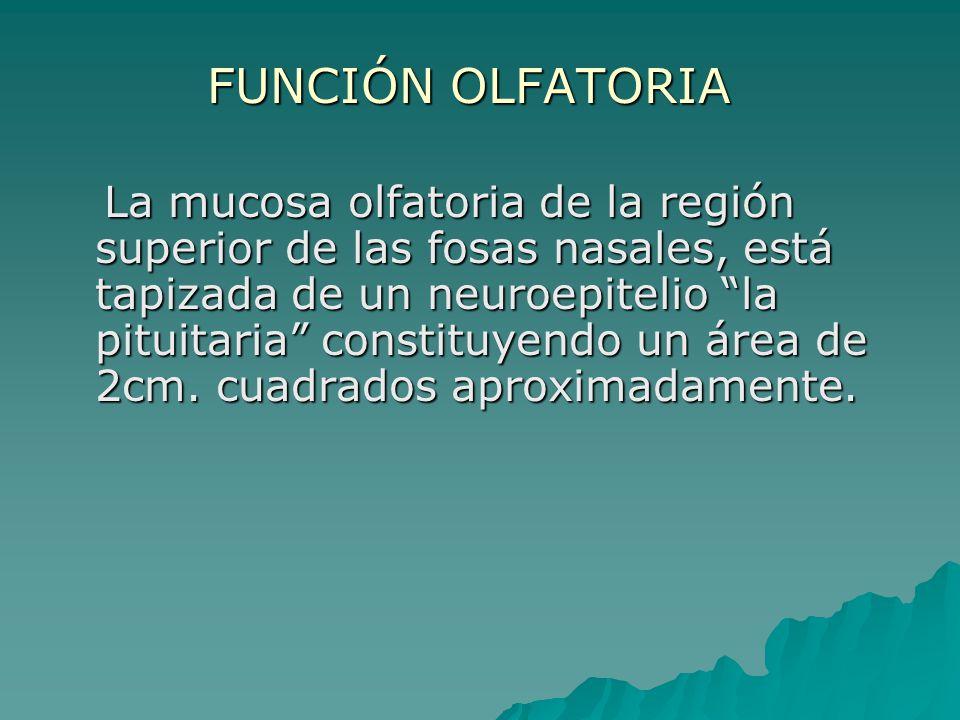 FUNCIÓN OLFATORIA