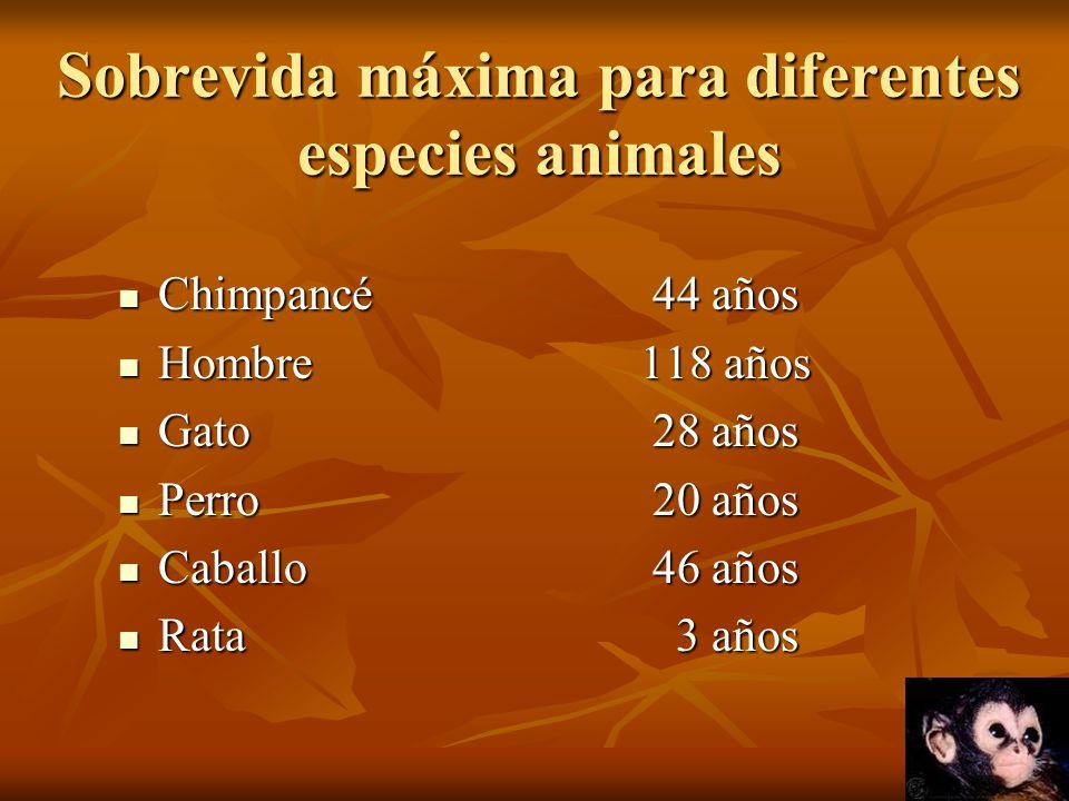 Sobrevida máxima para diferentes especies animales