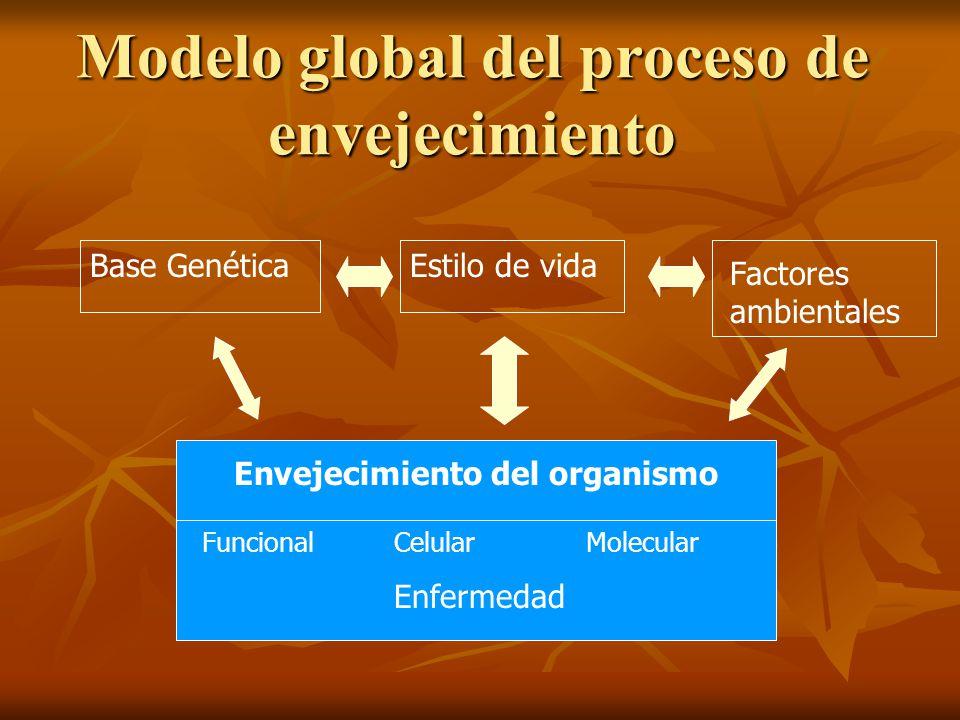 Modelo global del proceso de envejecimiento