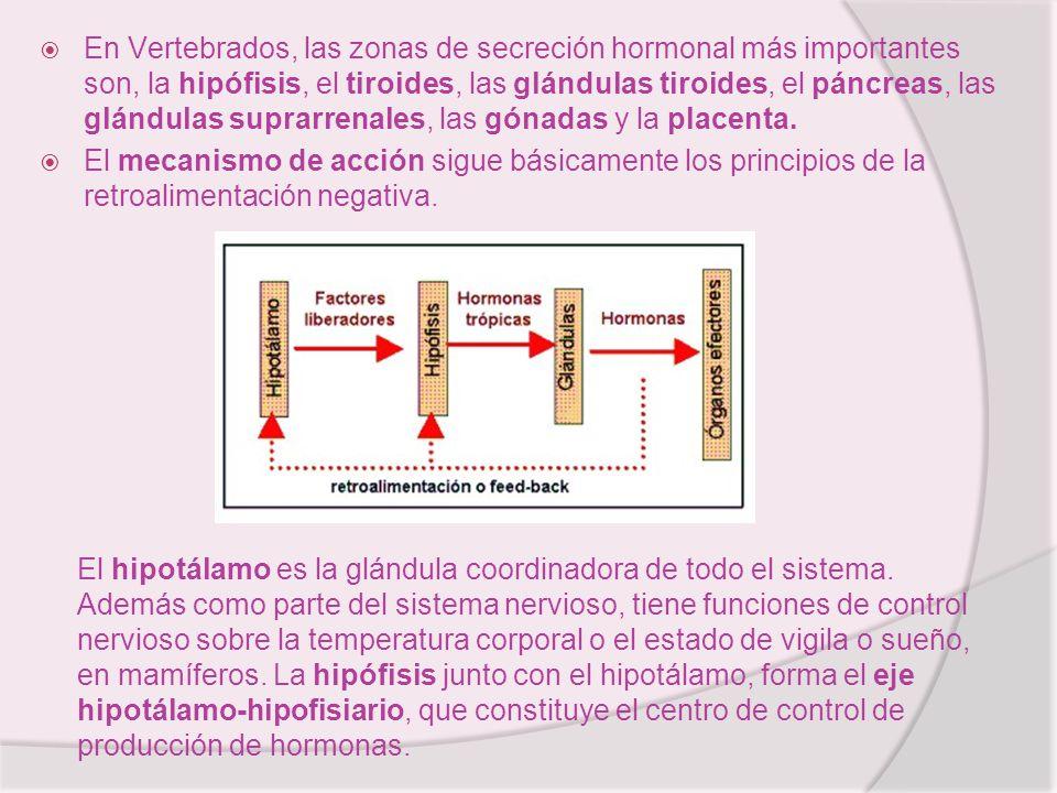 En Vertebrados, las zonas de secreción hormonal más importantes son, la hipófisis, el tiroides, las glándulas tiroides, el páncreas, las glándulas suprarrenales, las gónadas y la placenta.