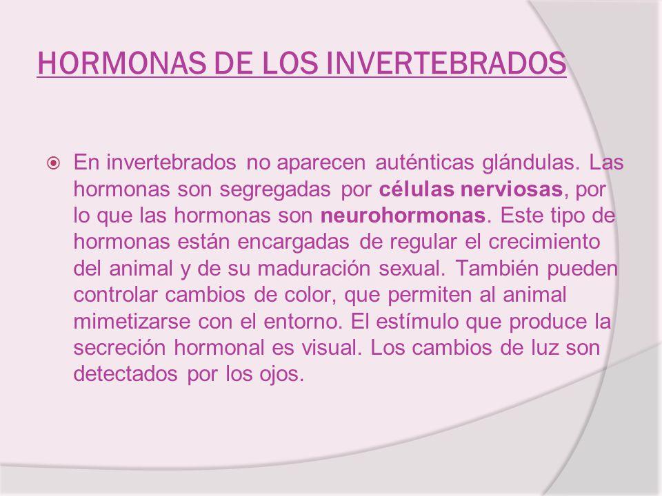 HORMONAS DE LOS INVERTEBRADOS