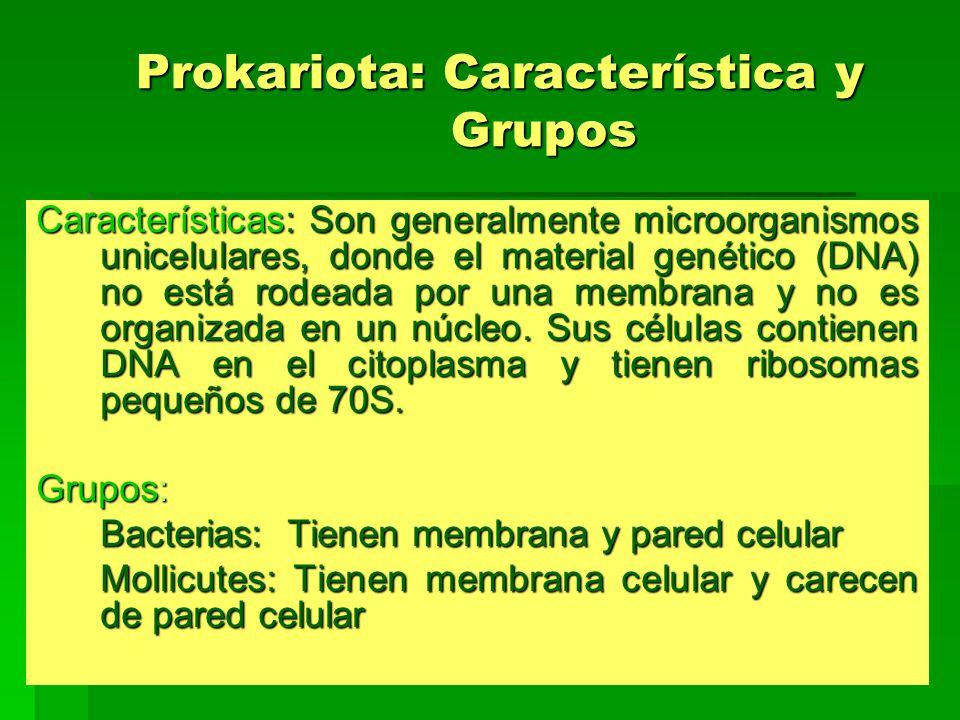 Prokariota: Característica y Grupos