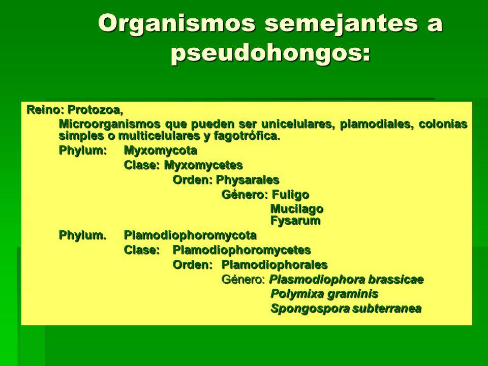 Organismos semejantes a pseudohongos: