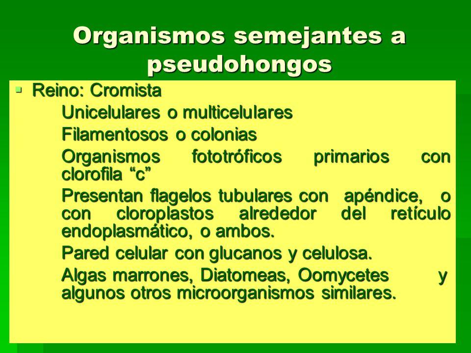 Organismos semejantes a pseudohongos