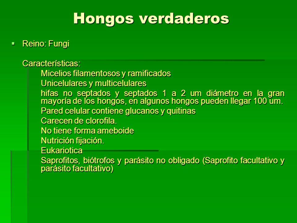 Hongos verdaderos Reino: Fungi Características: