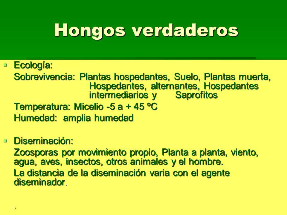 Hongos verdaderos Ecología: