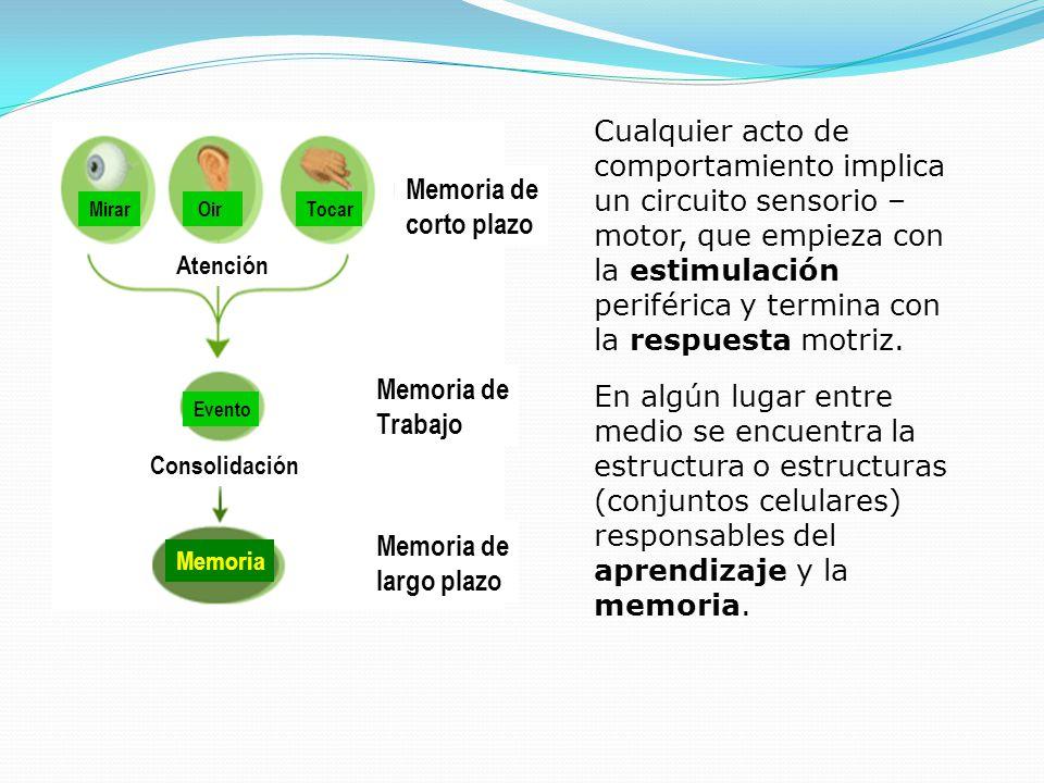 Cualquier acto de comportamiento implica un circuito sensorio – motor, que empieza con la estimulación periférica y termina con la respuesta motriz.