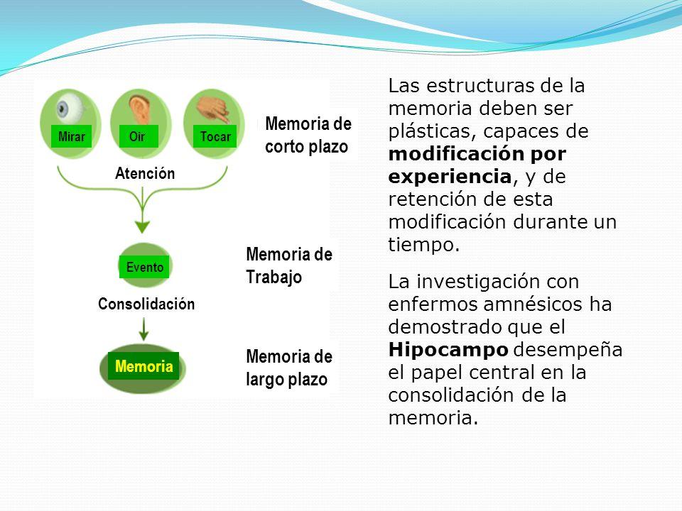 Las estructuras de la memoria deben ser plásticas, capaces de modificación por experiencia, y de retención de esta modificación durante un tiempo.