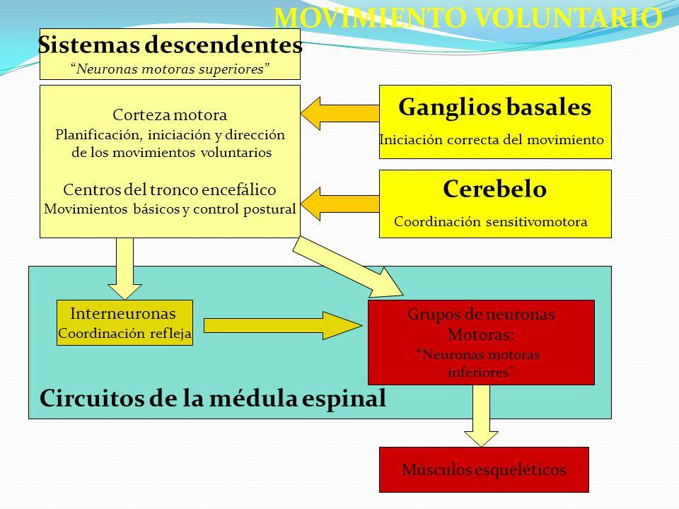 Sistemas descendentes