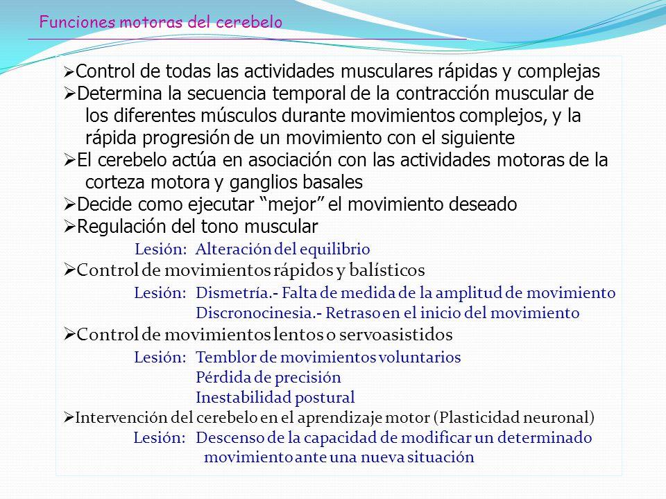Determina la secuencia temporal de la contracción muscular de