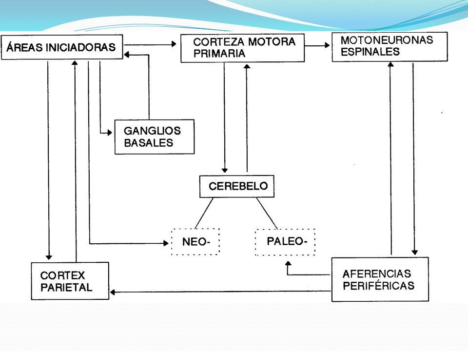 Fig 6.9 Chicharro,Vaquero Esquema de los componentes del sistema nervioso central que intervienen en un acto motor.