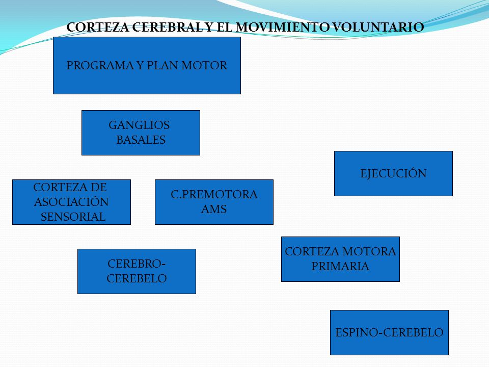 CORTEZA CEREBRAL Y EL MOVIMIENTO VOLUNTARIO