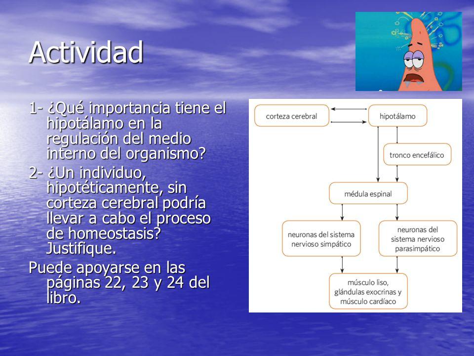 Actividad 1- ¿Qué importancia tiene el hipotálamo en la regulación del medio interno del organismo