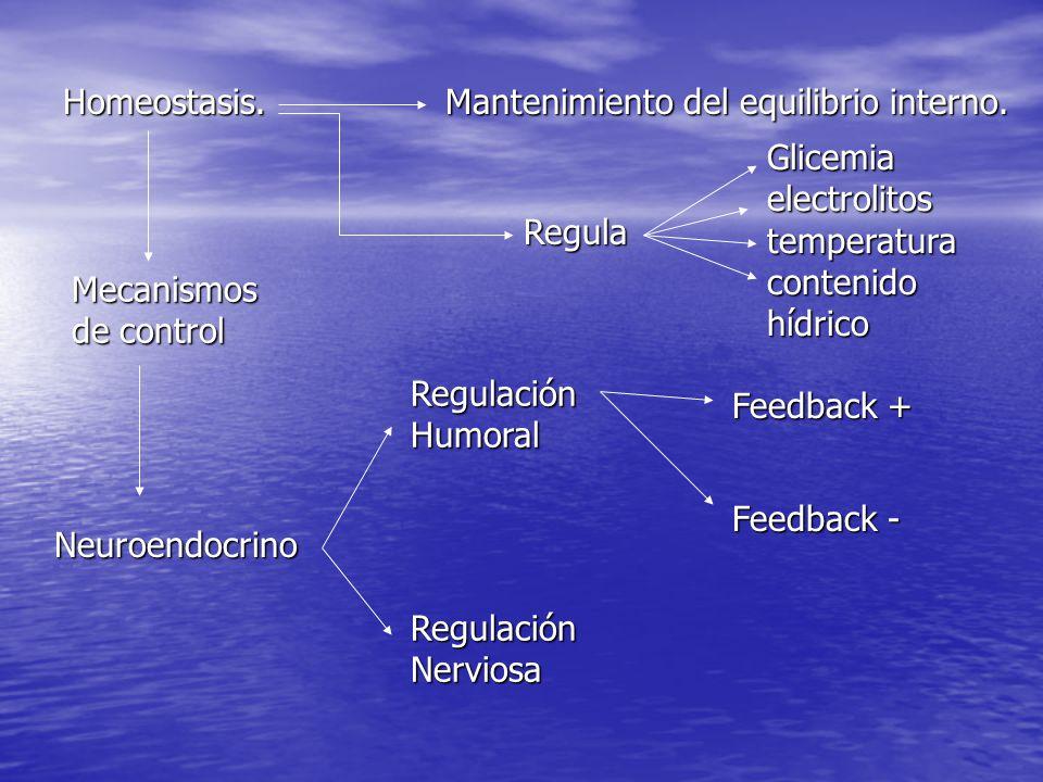 Homeostasis. Mantenimiento del equilibrio interno. Regula. Glicemia electrolitos temperatura contenido hídrico.