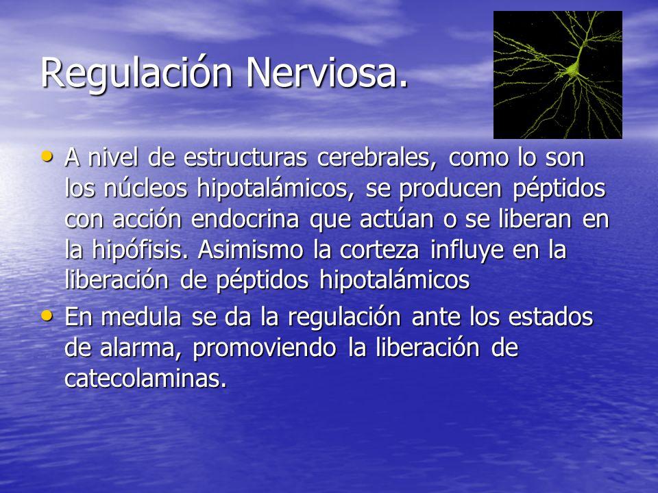 Regulación Nerviosa.