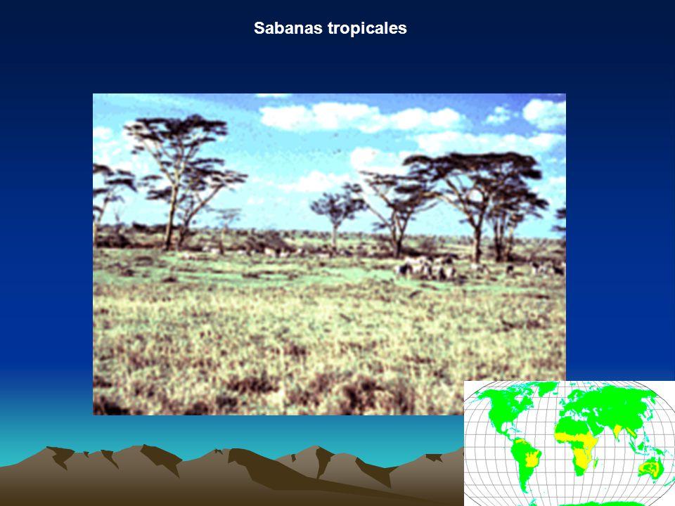 Sabanas tropicales