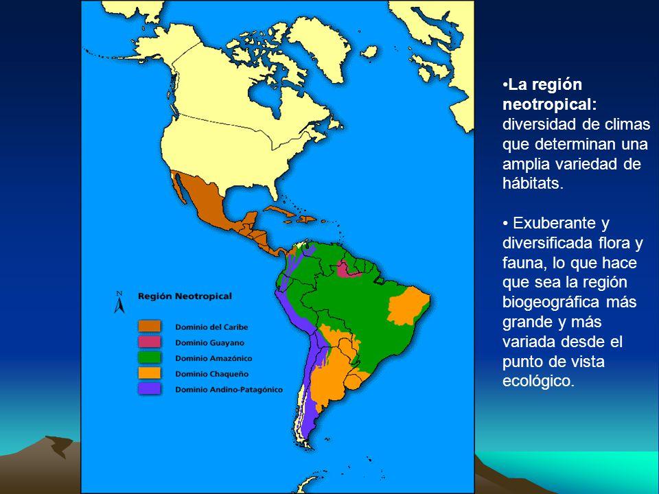 La región neotropical: diversidad de climas que determinan una amplia variedad de hábitats.