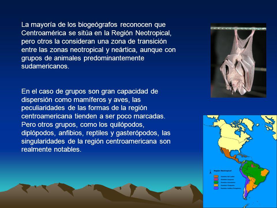 La mayoría de los biogeógrafos reconocen que Centroamérica se sitúa en la Región Neotropical, pero otros la consideran una zona de transición entre las zonas neotropical y neártica, aunque con grupos de animales predominantemente sudamericanos.