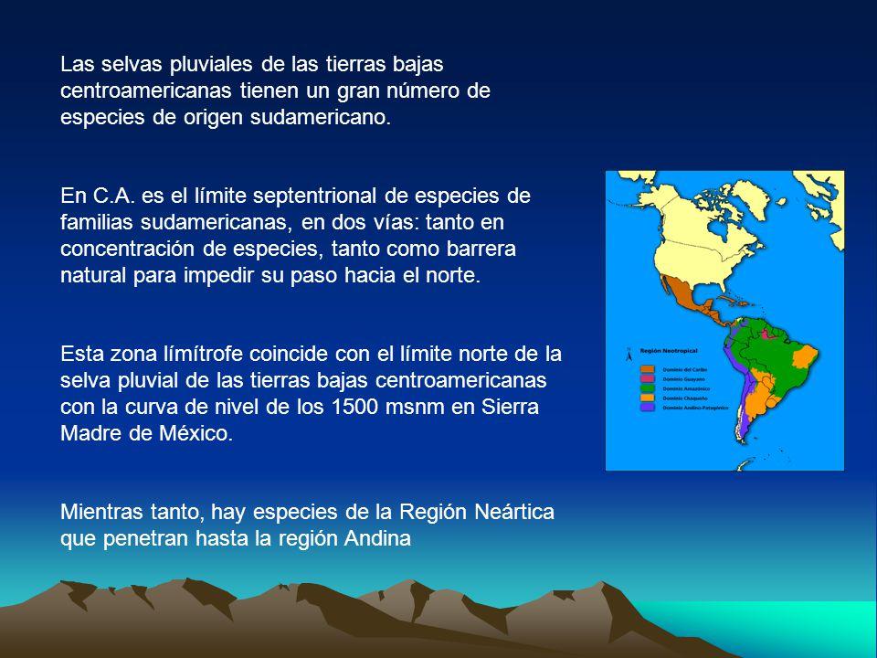 Las selvas pluviales de las tierras bajas centroamericanas tienen un gran número de especies de origen sudamericano.