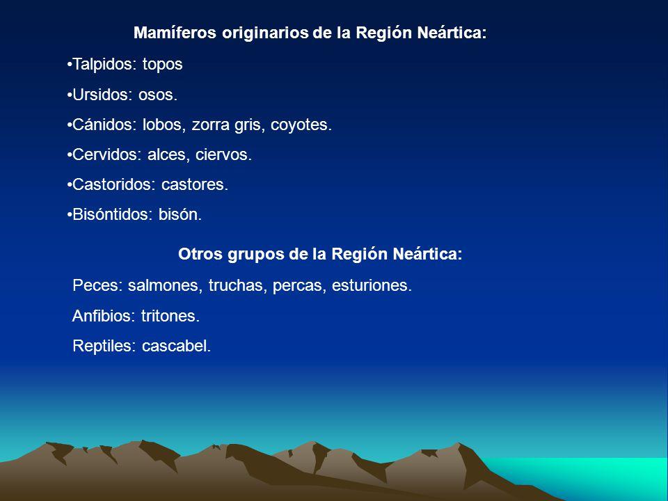 Mamíferos originarios de la Región Neártica: