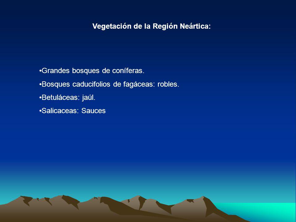 Vegetación de la Región Neártica: