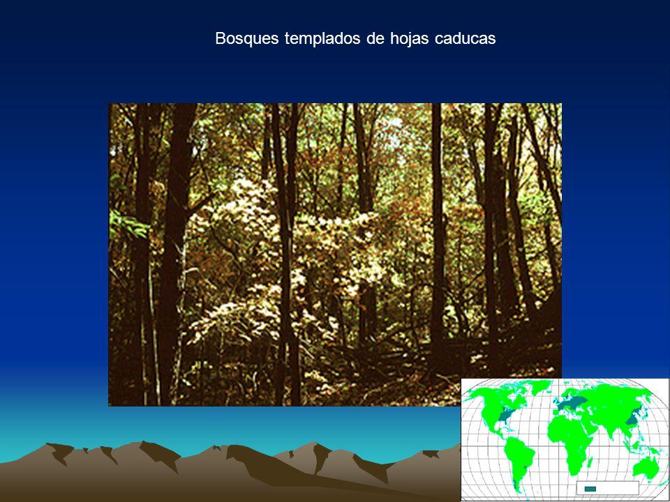 Bosques templados de hojas caducas