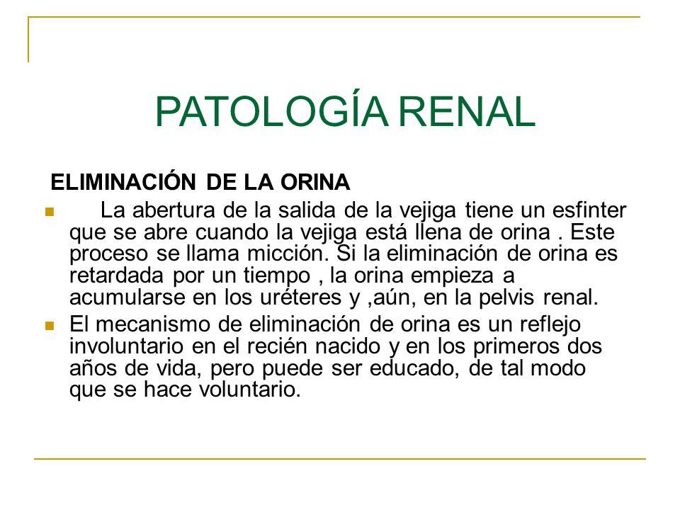 PATOLOGÍA RENAL ELIMINACIÓN DE LA ORINA
