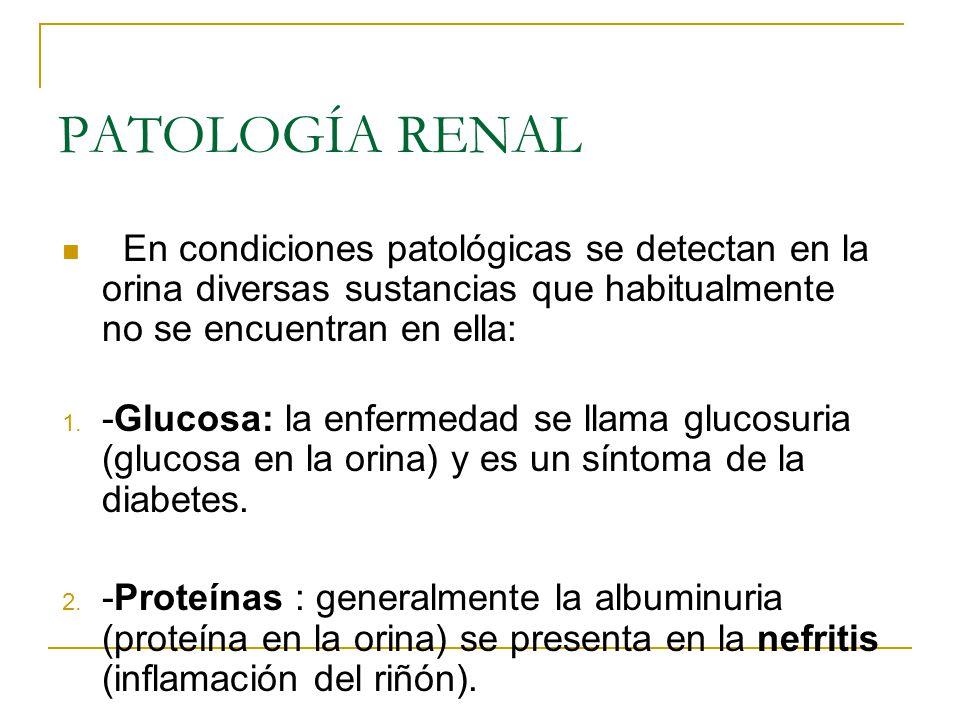 PATOLOGÍA RENAL En condiciones patológicas se detectan en la orina diversas sustancias que habitualmente no se encuentran en ella: