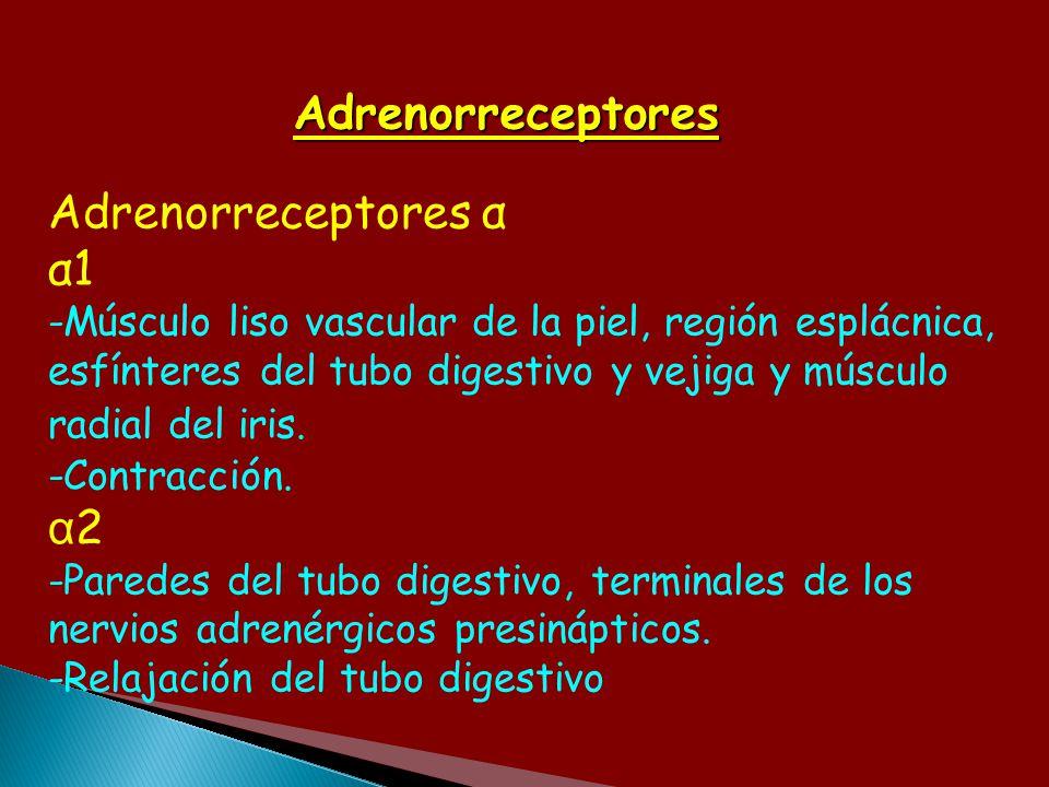 Adrenorreceptores Adrenorreceptores α α1 α2