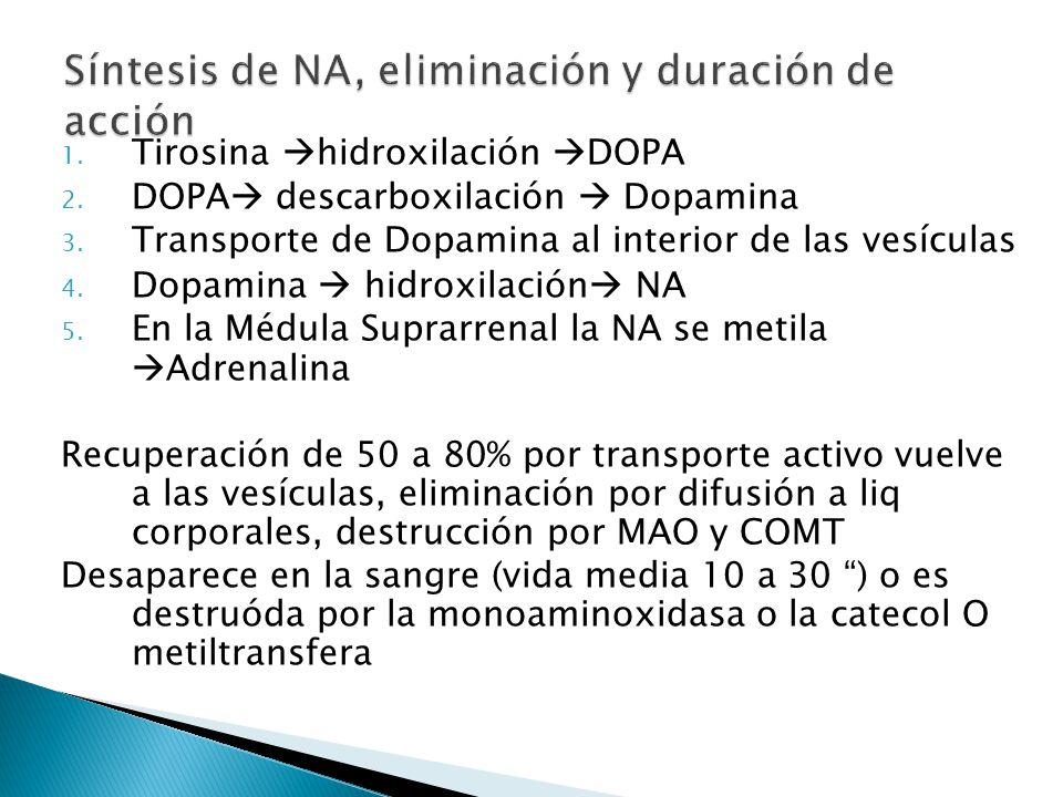 Síntesis de NA, eliminación y duración de acción
