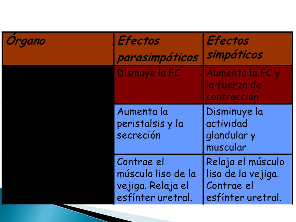 Órgano Efectos parasimpáticos Efectos simpáticos Músculo cardíaco