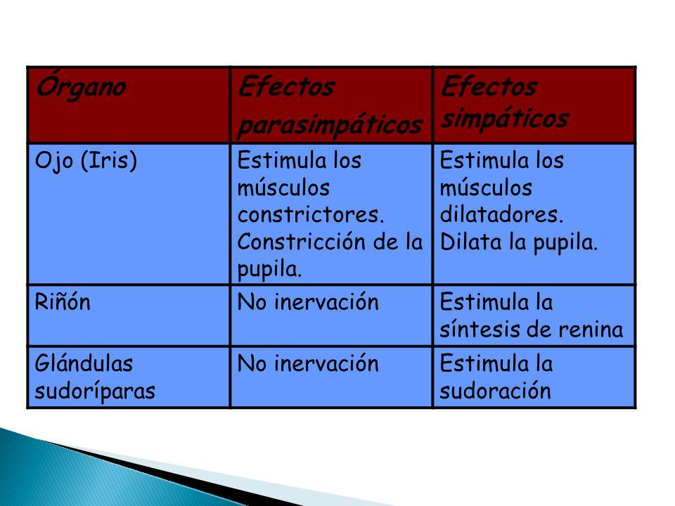 Órgano Efectos parasimpáticos Efectos simpáticos Ojo (Iris)